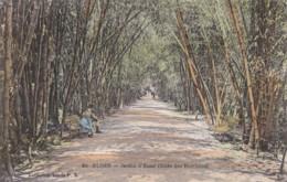 AR19 Alger, Jardin D'Essai, Allee Des Bambous - Algiers