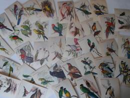 Ornithologie Collection De 40 Cartes  Thème Les Oiseaux De John Gould Dimension 9x14 Légende Au Verso 88 Photos - Birds