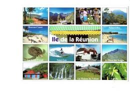 Cpm - ILE DE LA REUNION - ST GILLES PAUL DENIS LEU STELLA MATUTINA Vanille Tortue Turtle Ferme Corail SALASIE - Reunion