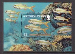 2012 Ascension Goat Fish Souvenir Sheet Complete Set Of 1 MNH - Ascension (Ile De L')