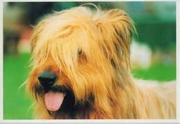 Dog, Chien, Hund, Perro (Briard) - Hunde