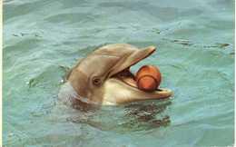 Dolphins,Dolphin - U.S.postcard 1976 - Dauphins