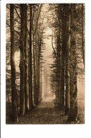 CPA - Carte Postale -BELGIQUE -Bruxelles Auderghem -Drève Des Enfants Noyés-1914 VM1865 - Bossen, Parken, Tuinen