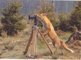 Renard Photographe - Autres