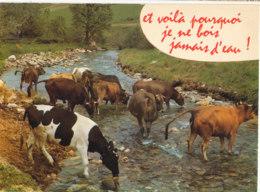 Troupeau De Vaches - Carte Neuve - Ed Cellard - Vaches