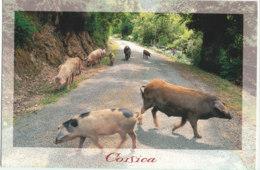 Cochons En Corse - Ed Subervie - Cochons