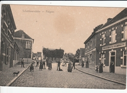 SCHELDEWINDEKE PELGRIM - Oosterzele