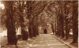 R088931 10343. The Avenue. Llandegai Church. Judges - Cartes Postales