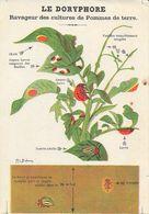 Avis Aux Cultivateurs: Lutte Contre Le Doryphore (ravageur Des Cultures De Pommes De Terre) - Illustration M.L. Dufrenoy - Cultures