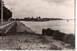 CPSM, (44), ANCENIS, Les Quai Sur Loire, Jamais Voyagée - Ancenis