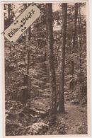 61 Forêt De Bellême- Cpa / Ancien Dolmen Sous Les Chênes Et Les Hêtres. - Dolmen & Menhirs