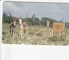 Bonaire - Donkeys - Antillen (Nederlands)