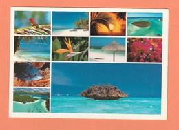 ILE MAURICE - COULEURS DE L'ILE - Mauritius