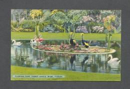 ANIMAUX - ANIMALS - FLAMINGOS POND PARROT JUNGLE FLORIDA - AFRICAN CRANES AND WHITE SWANS - Oiseaux