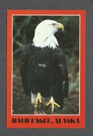 ANIMAUX - ANIMALS - BALD EAGLE ALASKA - PHOTO PETER MURRAY - BY I.A.A.C. INC. - Oiseaux