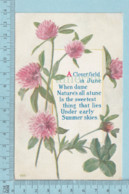 Carte Postale CPA - Clover Field  - Used Voyagé En 1912 + USA Stamp, Cover West Stewartstown N.H. - Non Classés