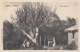 Porto Alegre - Cactus Gigante - Porto Alegre