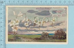"Carte Postale CPA - Flowers Language, Lyily,""Peace"" - Used Voyagé En 1909 + USA Stamp, Send To St-Johnsbury VT - Fleurs, Plantes & Arbres"