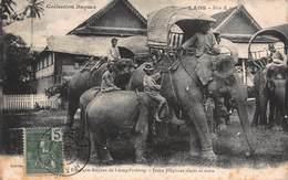 CPA LAOS - Elephants Royaux De Luang-Prabang - Jeune Elephant Têtant Sa Mère - Laos