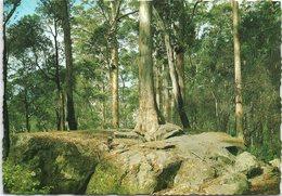 Tree In The Rock, Porongurup, Western Australia - Australia
