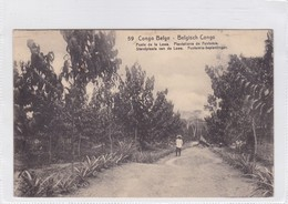 CONGO BELGE. POSTE DE LOWA. PLANTATIONS DE FUNTUMIA. CIRCULEE A BELGIQUE AN 1919 - BLEUP - Entiers Postaux