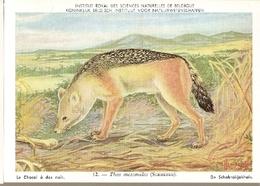 Belgium ** & Postal, Institut Royal Des Sciences Naturelles De Belgique, Le Chacal, Thos Mesomelas (12) - Belgique