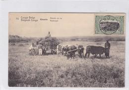 CONGO BELGE.KISANTU. RECOLTE DU RIZ. CIRCULEE A BELGIQUE AN 1920 - BLEUP - Entiers Postaux