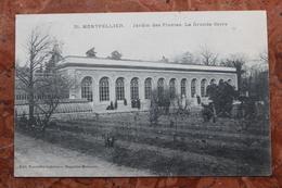 MONTPELLIER (34) - JARDIN DES PLANTES. LA GRANDE SERRE. - Montpellier
