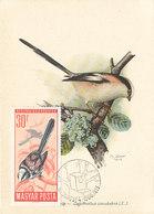 D36577 CARTE MAXIMUM CARD 1966 HUNGARY - LONG-TAILED TIT AEGITHALUS CP ORIGINAL - Passereaux