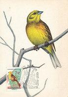 D36578 CARTE MAXIMUM CARD 1962 HUNGARY - EMBERIZA CITRINELLA CP ORIGINAL - Songbirds & Tree Dwellers