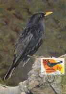 D36579 CARTE MAXIMUM CARD 1962 HUNGARY - TURDUS MERULA MERLE COMMON BLACKBIRD CP ORIGINAL - Passereaux