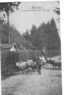 Marche En Famenne  L Entrée Du Fond Des Vaux--moutons   Animée - Marche-en-Famenne
