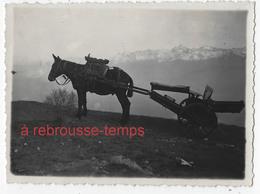 2 Photos-1938-transport Des Armes Par Des Mulets Dans Les Montagnes-n°2 - War, Military