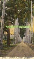 359 Angola Loanda  Plantation De Palmiers - Editor Souza Fontes - Angola