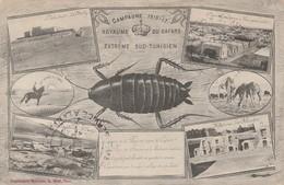 Militaria : Royaume Des Cafards - Extrème Sud-tunisien ( Tampon Marine - Service à La Mer ) - Guerra 1914-18