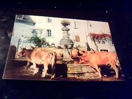 Cpa Non Ecrite Couleur  Severac L'eglise Vaches  D'aubrac A La Fontaine La France Touristique Aveyron - France