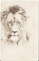 CARTE PHOTO TETE DE LION - Lions