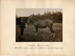 Horse, Godwick Beauty 9966, Suffolk Mare, B.B.Johnson - Sports