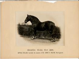 Horse, Morston Gider Gup 4520, Suffolk Stallion, Preston, Worlingworth - Sports