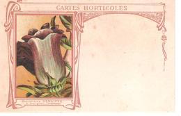 08 - CARIGNAN : GRAINETERIE DENAIFFE .CARTES HORTICOLES. - France