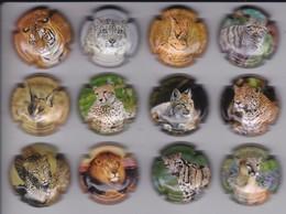SERIE COMPLETA DE 12 PLACAS DE CAVA DE FELINOS (CAPSULE) LEON-TIGRE-GATO MONTES-CAT-TIGER-LION - Placas De Cava