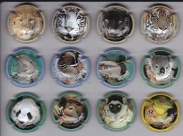 SERIE COMPLETA DE 12 PLACAS DE CAVA CAN QUETU DE ANIMALES (CAPSULE) TIGRE-TIGER-LEON-LION-PANDA- - Placas De Cava