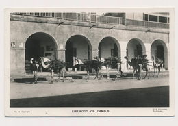 Sudan Soudan Camels With Firewood Port Sudan Postcard By Chryssides, Stamps - Sudan