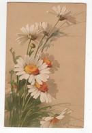 C Klein Daises Meissner & Buch Blumen Am Weg No.1977 Art Postcard 1914 - Klein, Catharina