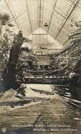 BERLIN, Zoologischer Garten, Aquarium, Mittelhalle Krokodilteich (1920s) Foto-AK - Germany
