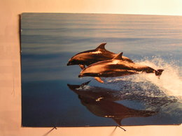 Animaux - Dauphins - Dauphins