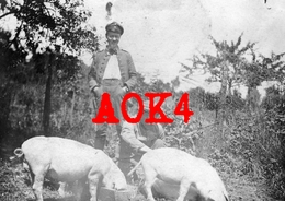 08 Ardennes OSNES Carignan Elevage Porcin Porc Cochon Schwein Occupation Allemande 1916 Agriculture - France