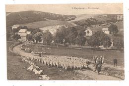 L'Espérou-Vue Générale-Moutons--(D.269) - France