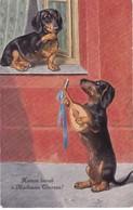 Dackel Teckel Dachshund Chien Dog Cani, Hunde Enfant Musik  Old Cpa. 1906 - Hunde