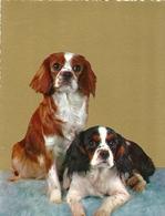 Cartolina - Cani